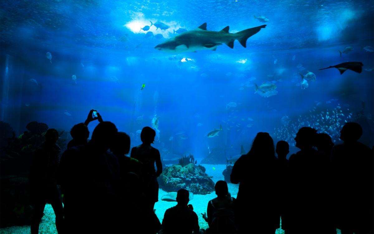 People looking to marine life in aquarium